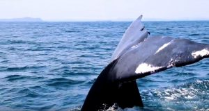 Sri Lanka Whale Watching | Photo Credit: Sri Lanka Tourism Official YouTube Channel